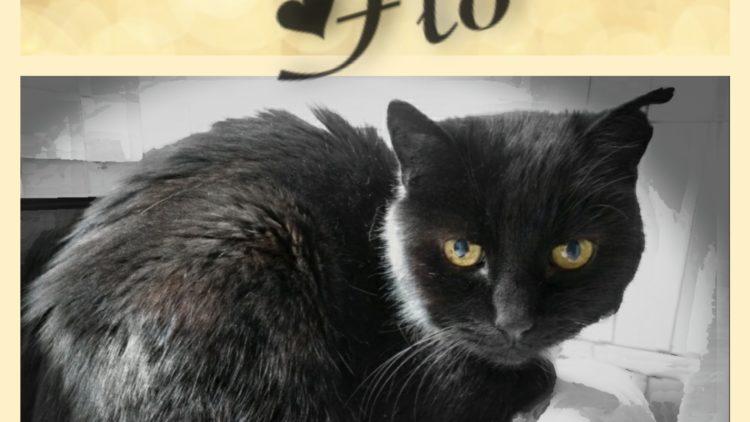 Adopteer Flo